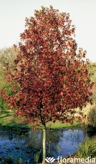 Los 5 mejores arboles de hoja caduca for Arboles de hoja perenne para jardin