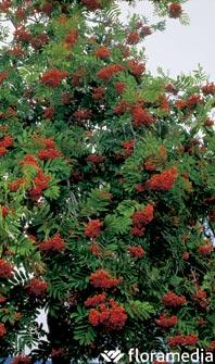 Los 5 mejores rboles de hoja caduca for Arbustos ornamentales para jardin
