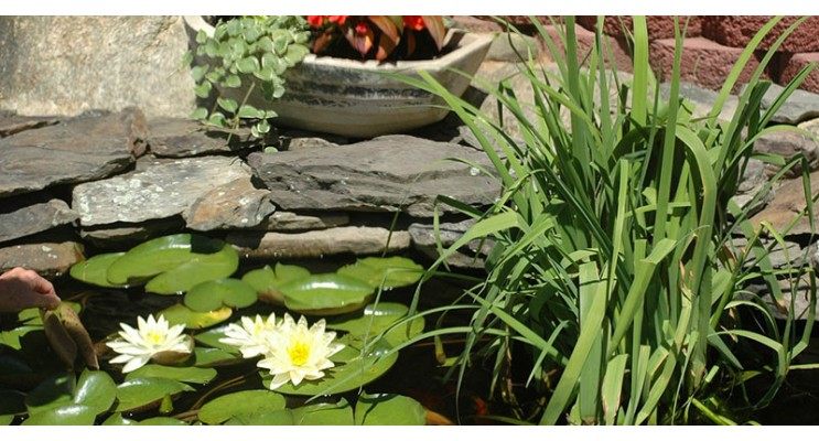 C mo hacer un estanque for Como hacer un estanque economico