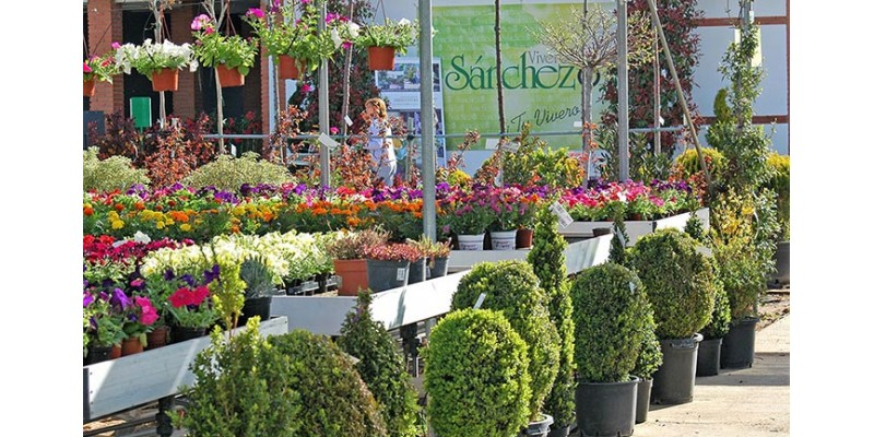 Por qu confiar en un centro de jardiner a especializado for Centro de jardineria