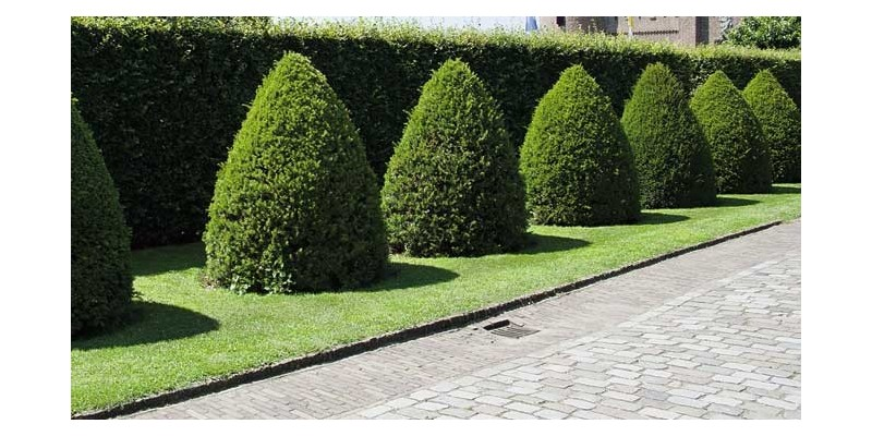 Dise a tu jard n - Disena tu jardin ...